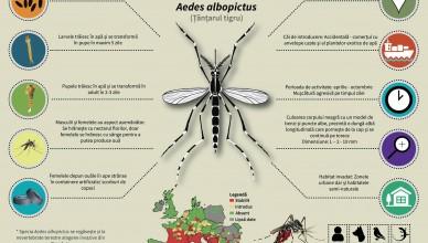 Infografice Tantar